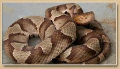 Gloucester Snake Removal