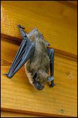 Newport News Bat Exclusion