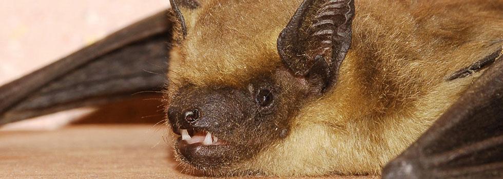 Yorktown Bat Exclusion Company