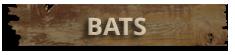 Bat Exclusion Hampton