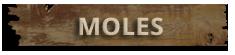 Mole Control Hampton