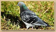 Virginia Nuisance Bird Control