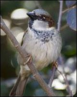 Hampton Nuisance Bird Control