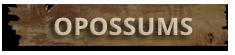 Opossum Removal Suffolk
