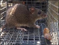 Poquoson Rodent Control Company