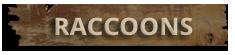 Raccoon Control Norfolk