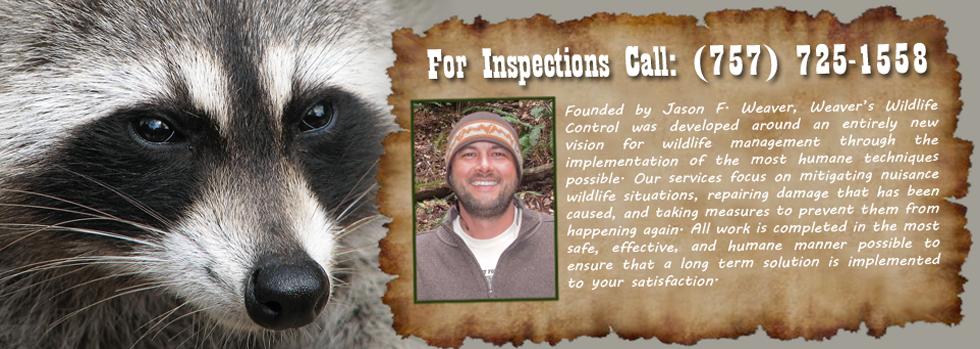Weaver's Wildlife Control Company