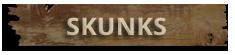 Skunk Removal Virginia Beach
