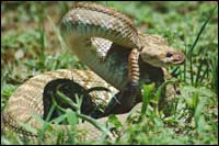 Snake Removal Chesapeake