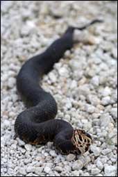 Virginia Beach Snake Removal