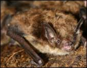 Gloucester VA Bat removal