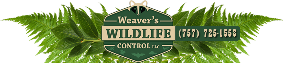 Weaver's Wildlife Control Hampton Virginia